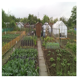Harlington Allotments